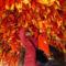 kivánságfa