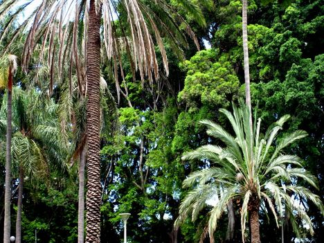 Pálmák a Hyde Parkban