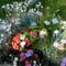 pillangós virágok