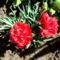 Most nyíló virágaim 10