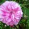 Most nyíló virágaim 7