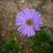 Most nyíló virágaim 8