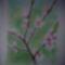 201205281014 Virágzó ág