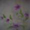 201205281017  Egzotikus virágok