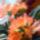 Fenyvesiné Éva Dézsás növények, citromok