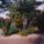 Fenyvesiné Éva kertem és növényeim (jelen és a múlt)