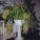 Fenyvesiné Éva orchideák