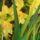 Orchidea-002_1455716_1715_t