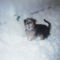 Picur a hóban 1
