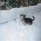 Picur a hóban 2
