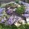 Szikla kertem