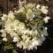 virágaim 2012 tavasz