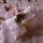 Gyuru_parna_8_masik_fazon_1456983_7569_t