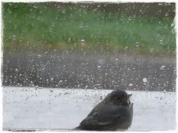 Esik eső jujujuj, hozzá még a szél is fúj, ha esik is mindhiába,