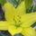 virágok( liliom, stb.)