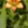 azurkék / kertem virágai