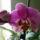 Orchideam_1461074_9781_t