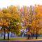 Őszi fák