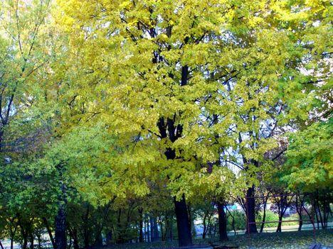 Őszi park.