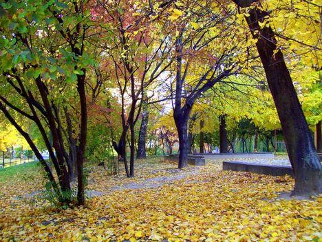 Őszi park