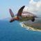 Repülő teknőc-5753