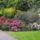 Rododendronok Mainau- szigeten(D)