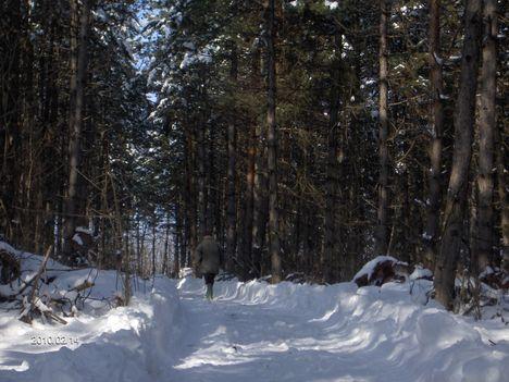 2O1O II 14   Szápár - i erdő télen