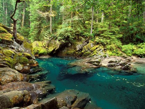 Ohanapecosh_River_Mt