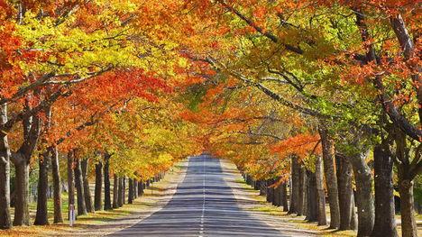 Ősz színei-501072