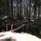A szentimrei erdőben