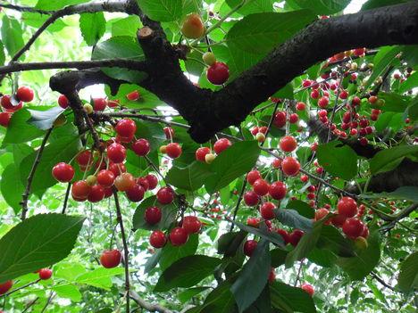 Rég láttam ennyi gyümölcsöt fámon