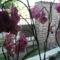 orchideák 19