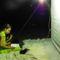 02.lepkék éjszaka
