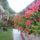 Bojtorné Irmuska képei -virágos kertem