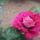 Kedvenc virágaim a kertemből