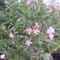 virágaim (12)