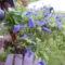 Virágaim (25)