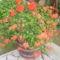 virágaim (40)