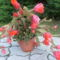 virágaim (44)