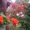 virágaim (54)