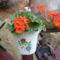 virágaim (60)