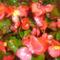 virágaim (71)