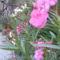 virágaim (8)
