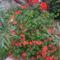 virágaim (9)