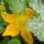D. Marcsika virágai