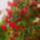 junius  virág özön