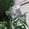 megjelent az első nagy lepke a sédkender virágán! 001