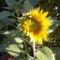 kert-virágaim 010