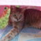 Pötyi cicám kedvenc helye a kertben