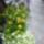Balkon_beultetes-001_1470007_3529_t
